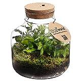 Ecoworld Jungle-Biosphäre - Ökosystem (Basic) mit 3 Farn-Pflanzen & LED-Beleuchtung - Tolle Geschenkidee & Indoor-Dekoration für Wohnung & Haus - Glas: Ø: 22 cm, Höhe: 23 cm, Öffnung: 10 cm