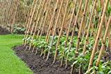 Pflanzenfuchs® Bambusrohr Tonkinstäbe Bambusstäbe - Verschiedene Größen - 10er Pack (150cm x Ø 16-18 mm)