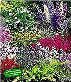BALDUR Garten Buntes Staudenbeet 'Multi-Colour', 12 Pflanzen, Staudengarten, Stauden-Sortiment, 3X Rittersporn, Schleierkraut, Phlox, Sonnenhut, Prachtscharte, Astilben, Schafgarbe und Kugeldistel
