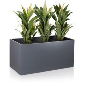 Pflanztrog-grau-matt-Muro50-3_500x500