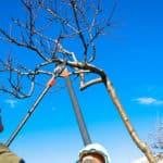 Teleskop Baumschere Test