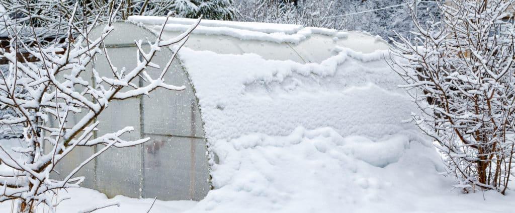 Frostwächter im Gewächshaus