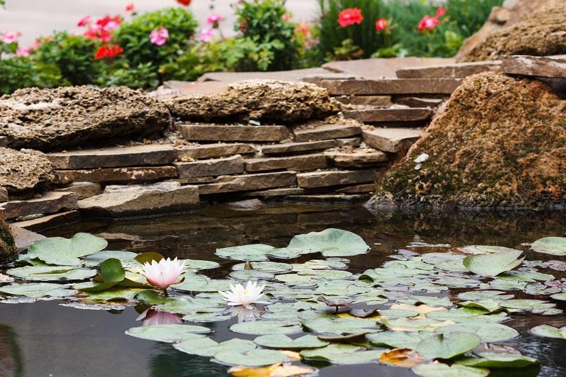 Schwimmteich mit Lotusblumen