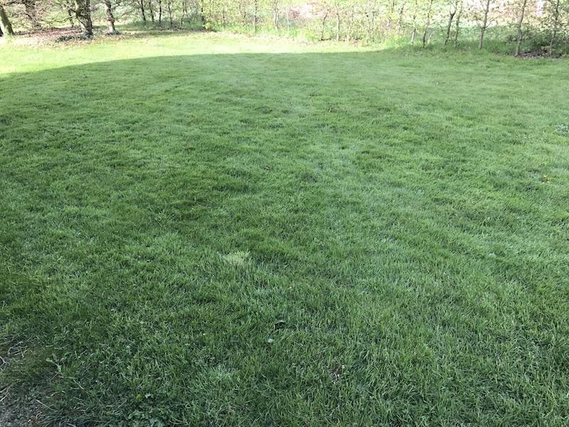 Perfekte Rasenfläche mit dem Mulchmäher Robomow RC312