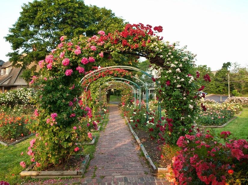 Rosenbögen als Rankhilfe für Rosen