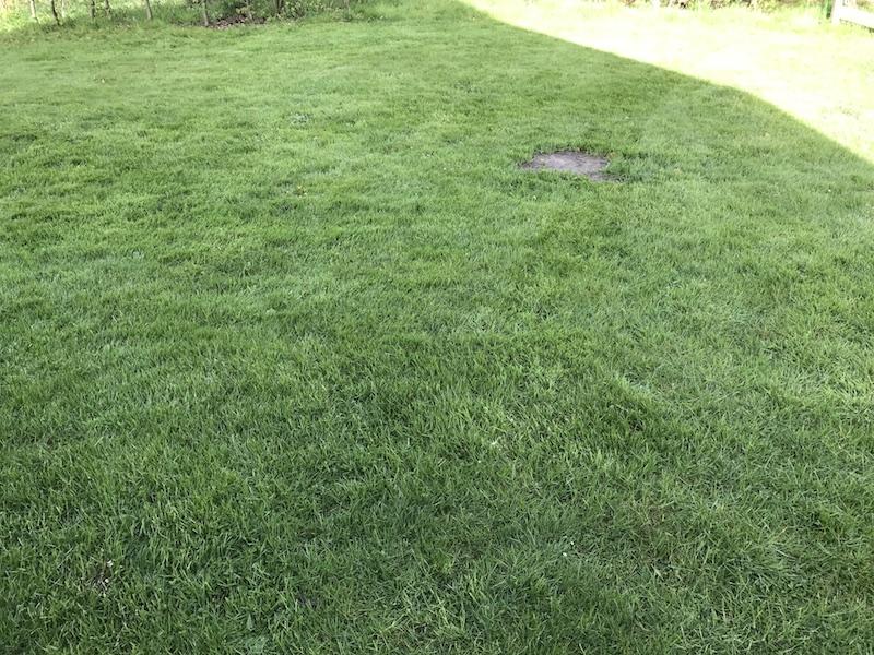 Rasenfläche mit dem Robomow RC312 Mulchmäher Rasenmähroboter gemäht