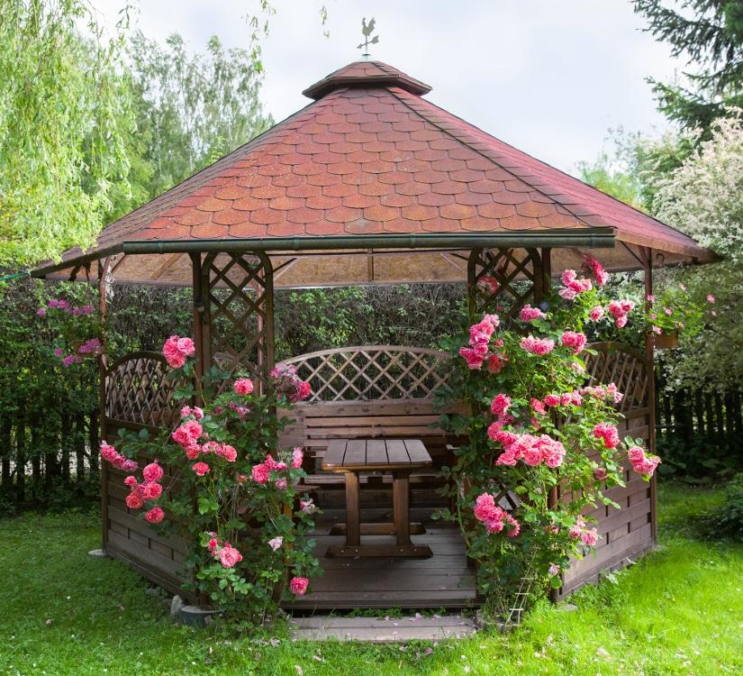 Strauchrosen-am-Gartenpavillon