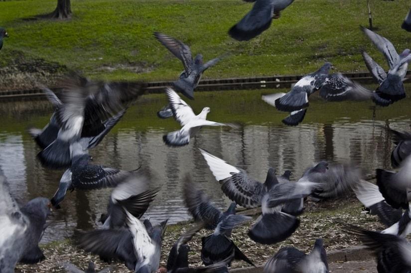 Oft sind die Taubenspikes einfach notwendig...