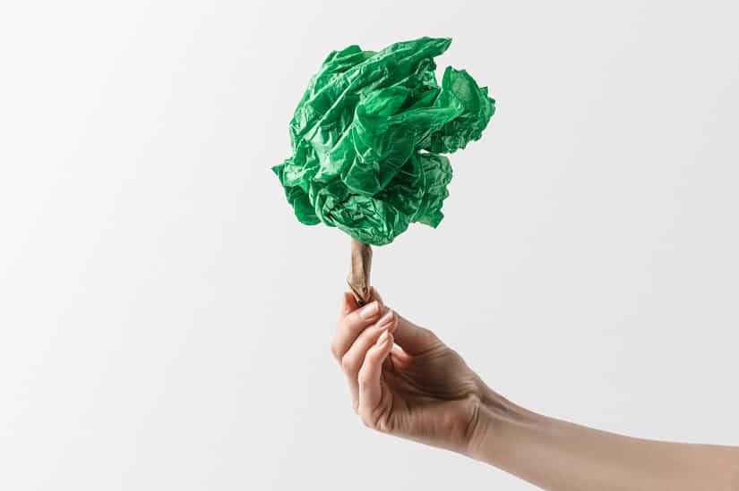 Die Plastiktüte als bestes Mittel gegen Buchsbaumzünsler