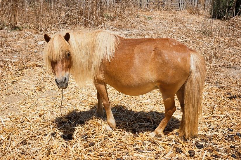 Pferdemist: ideal für das Düngen im Gewächshaus!