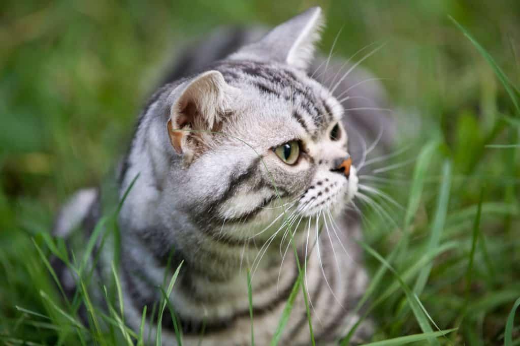 Pflanzen gegen Katzen