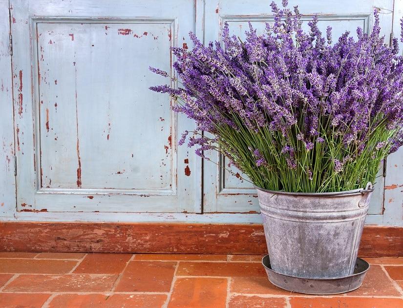 Mit Lavendel Wespen Vertreiben