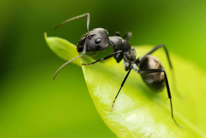 Ameisenbefall im Gartenhaus vorbeugen und beseitigen