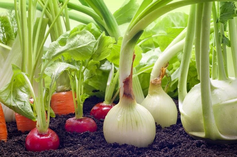 Erde für den Anbau von Gemüse im Gewächshaus