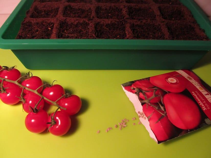 Tomaten säen