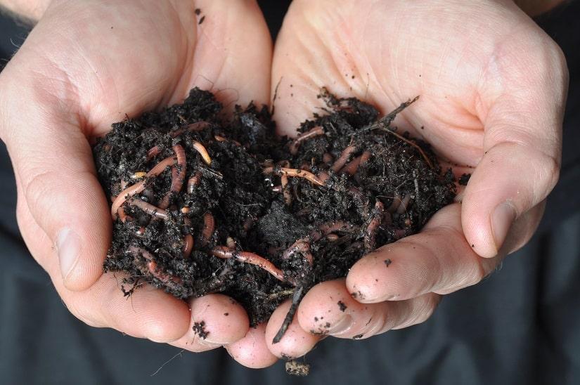 Mit einer Wurmkiste kann man Wurm selbst herstellen.