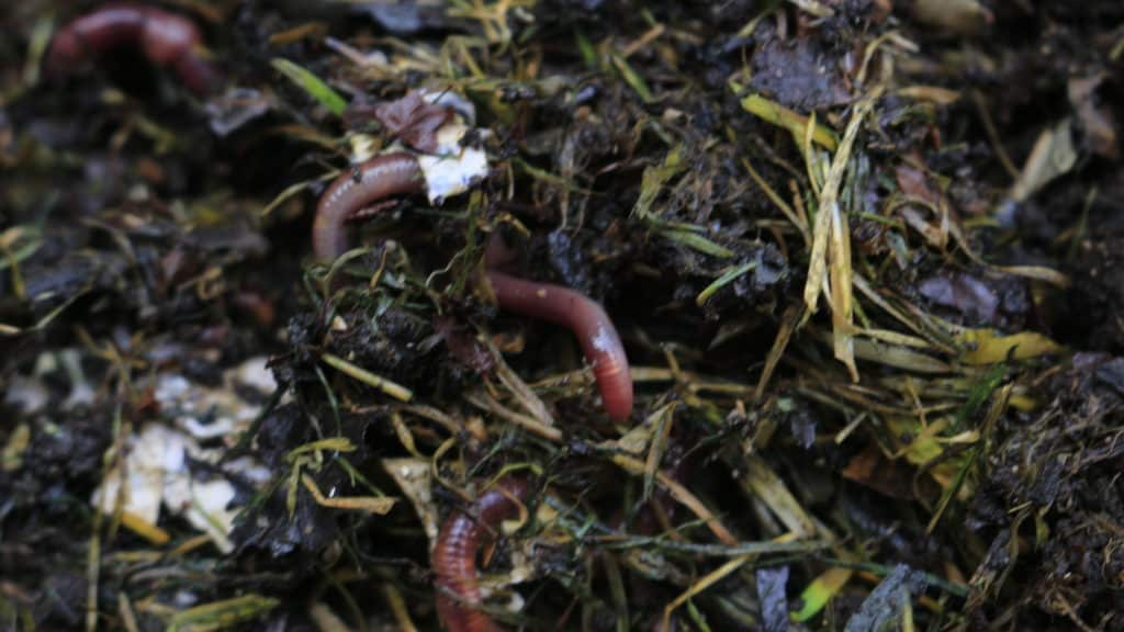 Wurmkomposter
