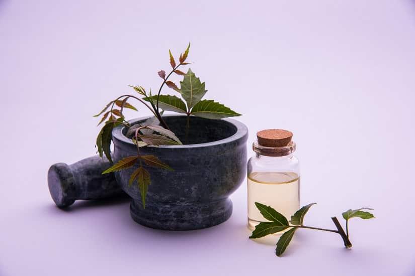 Auch Neemöl gilt als Buchsbaumzünsler-Gift