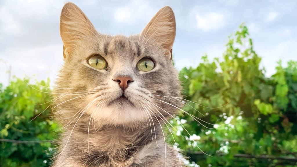 Katzen kann man auch mit einigen Pflanzen vertreiben