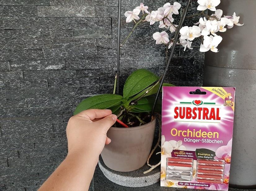 Düngerstäbchen für Orchideen werden eingebracht.