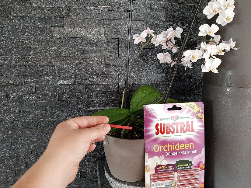 Düngerstäbchen für Orchideen