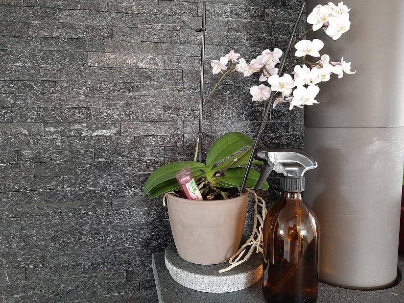 Orchidee mit Vitalkur