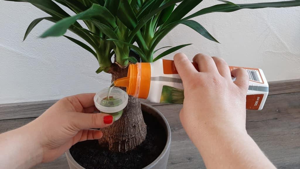 Palmendünger