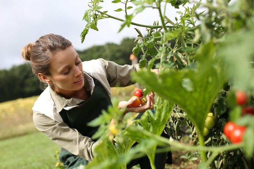Ein Ampferstecher hilft den Garten in Ordnung zu halten