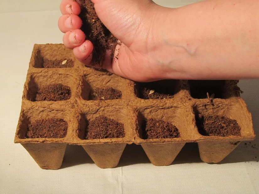 Decke die Samen etwa einen Finger dick mit Erde ab.