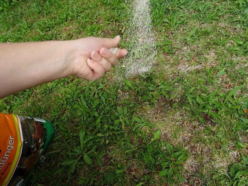 Herbstrasendünger wird per Hand ausgebracht