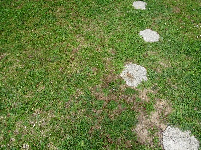 Rasen mit deutlichen brauen Flecken und kahlen Stellen von der Belastung im Winter