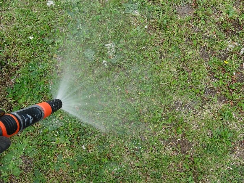 Der Rasen wird nach zwei Tagen gewässert