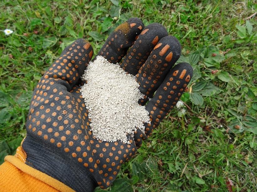 Der Rasendünger mit Unkrautvernichter wird mit Schutzkleidung ausgebracht
