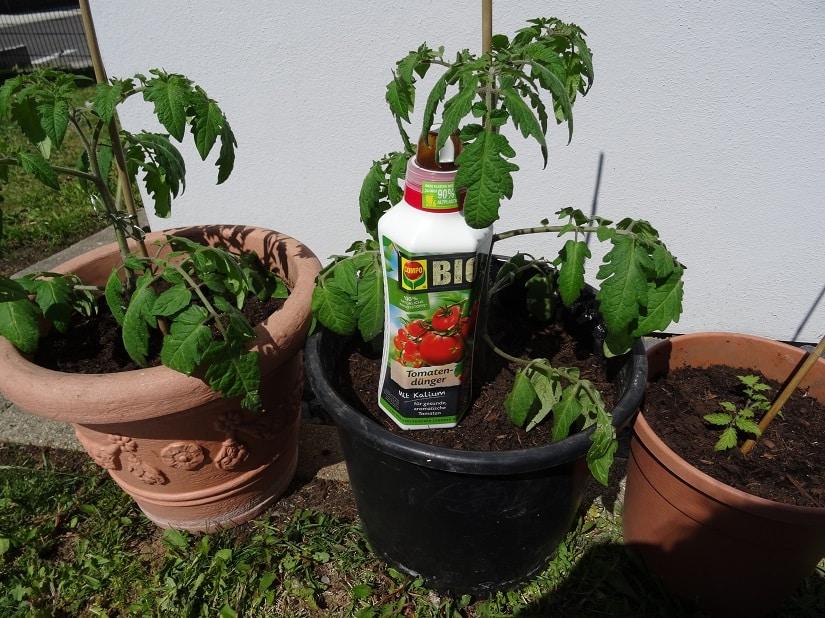 Tomatensträucher mit speziellem Bio-Flüssigdünger