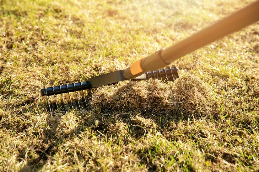Gartenrasenbelüftung mit Handvertikutierer-Harke