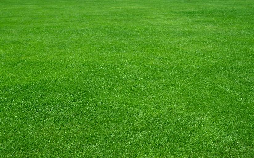 gesunder Rasen dank der Rasenlüfter-Walze
