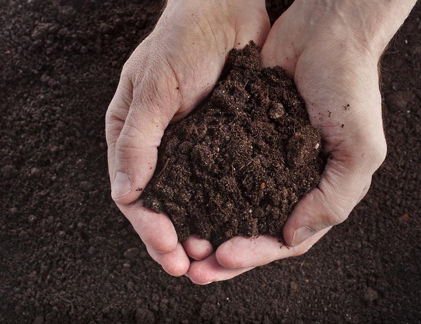 Boden für Johannisbeeren