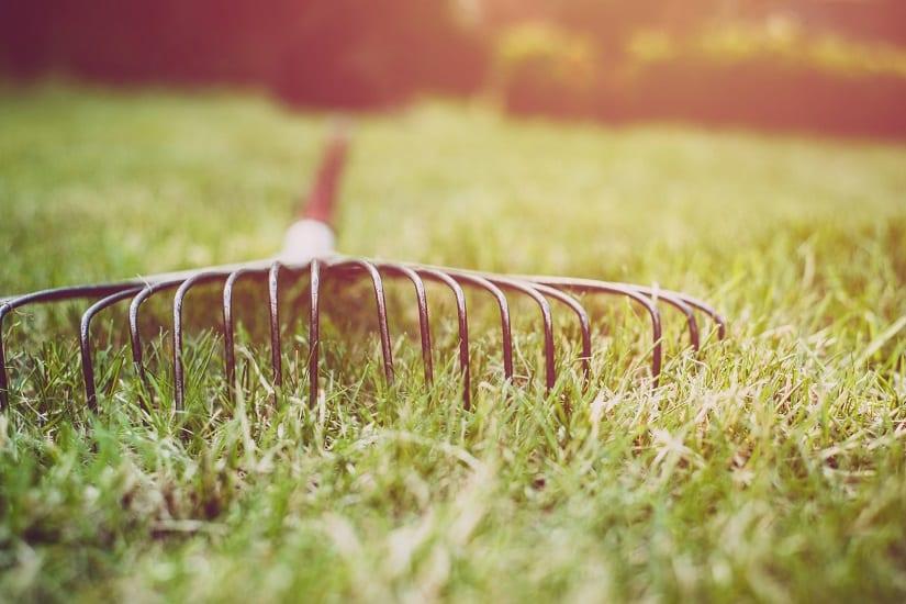 Das Vertikutieren bringt den Rasen gleich mehrere Vorteile