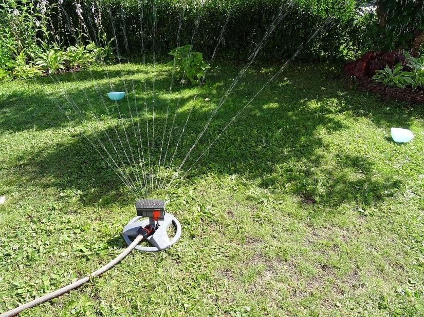 Rasen wird gewässert, bis die Marmeladengläser zu 3 cm gefüllt sind