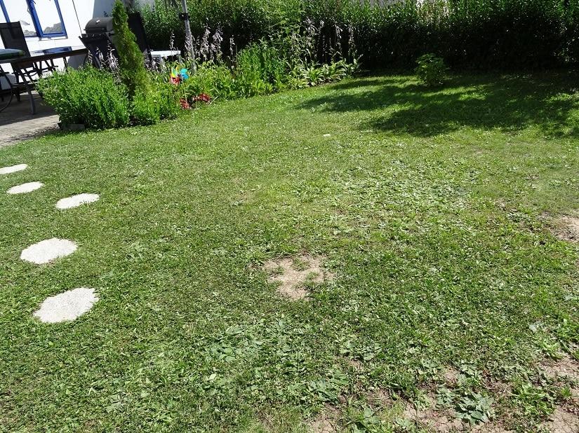 Dieser Rasen wurde eine ganze Zeit lang nicht gedüngt. Er zeigt sich mit viel Unkraut, Lücken und nicht gerade sattgrün.