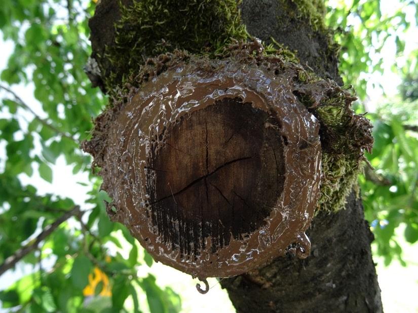 So kann die Wunde altern und der Baum wird optimal in der Heilung unterstützt.