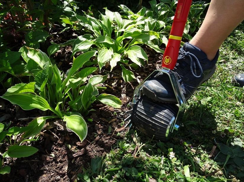 Sticht man das Gras regelmäßig ab, wächst es nicht mehr so kräftig in die Blumenbeete