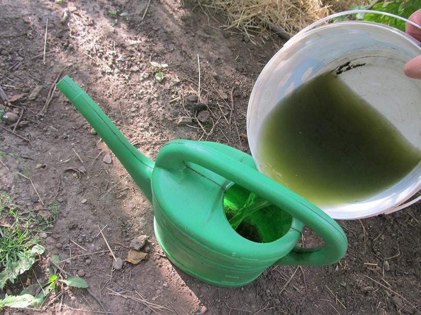 Verdünnt kann sie nun als Dünger oder Pflanzenschutzmittel angewendet werden.