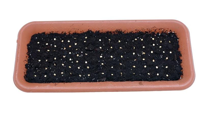 Aussaat von Samen im Boden in einem Blumenkasten mit Wasserspeicher