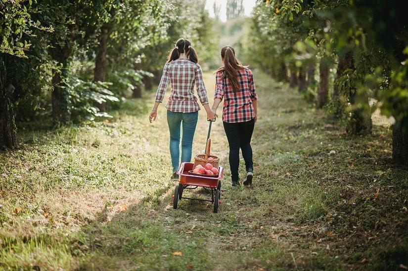 Ein Gartenwagen erleichtert die Arbeit im Garten und auf den Feldern