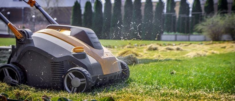 Je besser du also auf einen gut gepflegten Rasen achtest, desto weniger wirst du Probleme mit Hirse im Rasen haben.