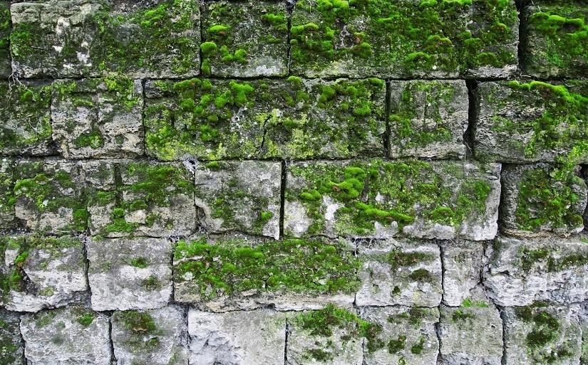 Mauer mit Grünbelag