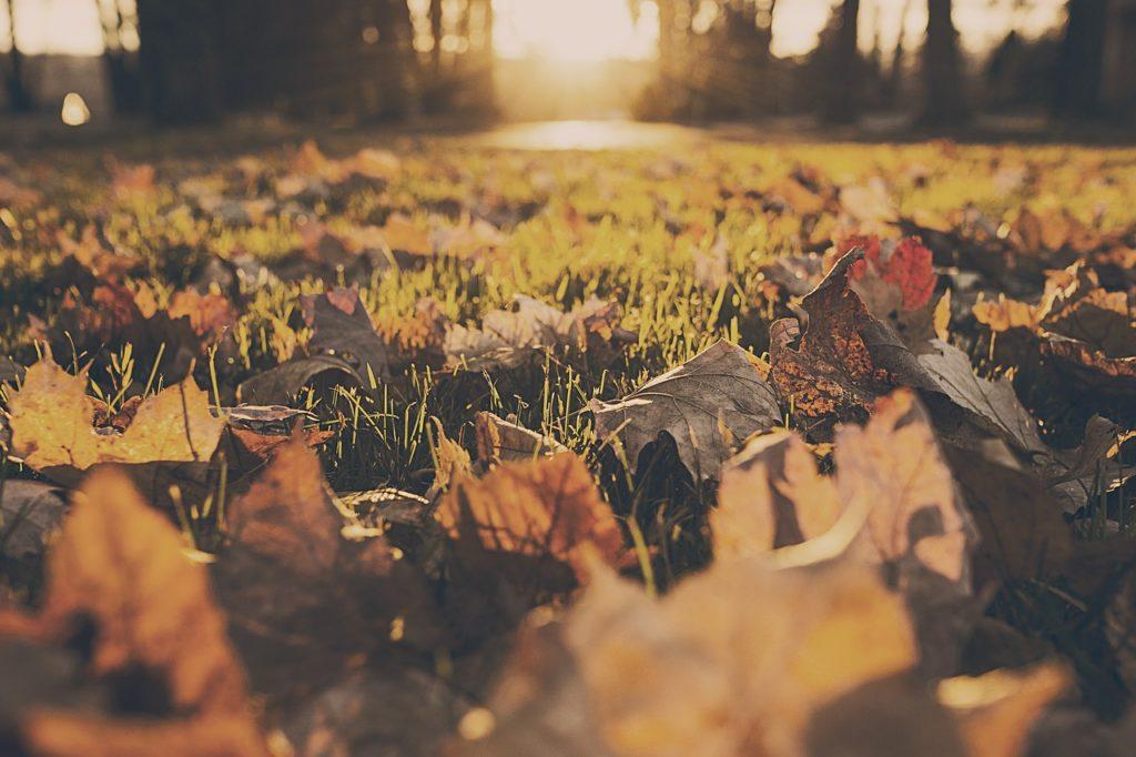 Blätter im Herbst auf dem Rasen