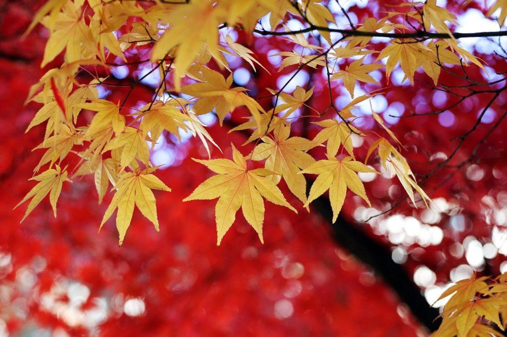 Blätter verfärben sich im Herbst