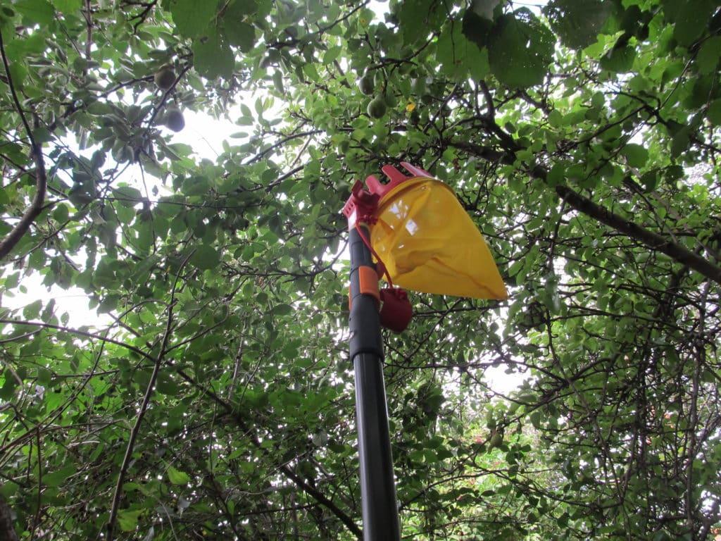 Fiskars Universaladapter mit Wolf-Garten multi-star Obstpflücker